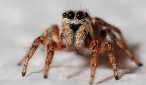 Насколько действительно опасны паукообразные насекомые?