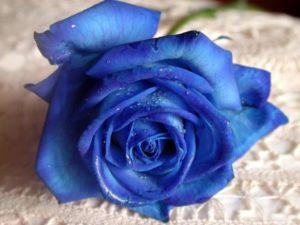 Что обозначает нелюбовь человека к синему?