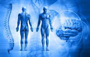 Психосоматическое направление в медицине - особенности