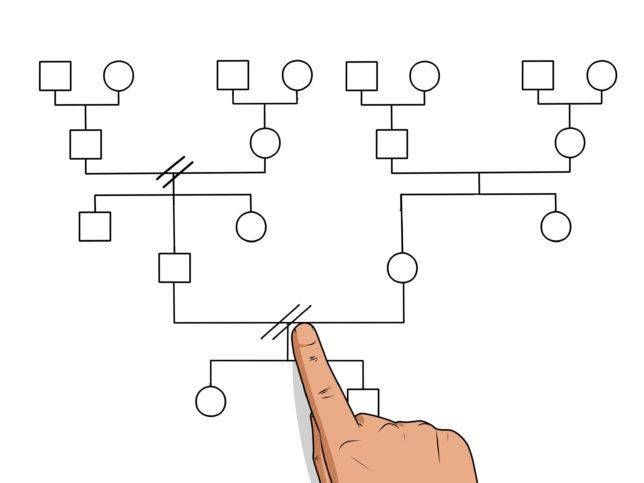 По каким направлениям и как составить геносоциограмму?