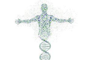 Значение генетики