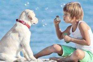 Ребенок просит собаку: что делать родителям?
