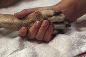 Советы психолога, как легче пережить потерю своего домашнего животного