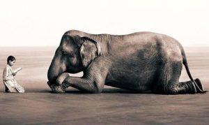 Чем человеческая деятельность отличается от поведения диких зверей?
