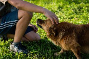 Особенности и значение воспитания гуманности у детей