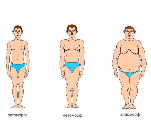 Что такое тип телосложения и каким бывает?
