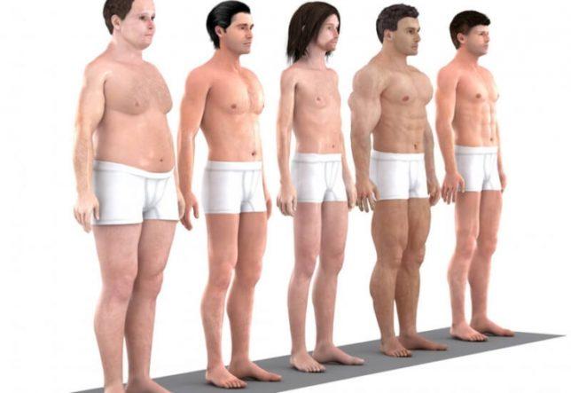 Что такое тип телосложения человека?