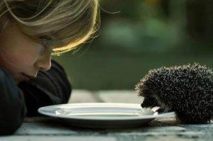 Что мы понимаем под человеческой добротой?