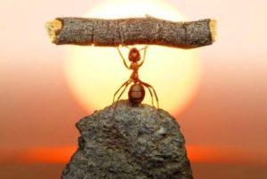 Как происходит формирование лидерских качеств?