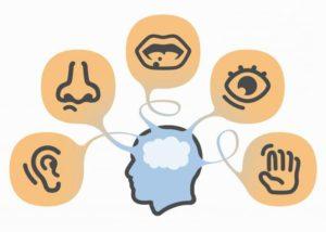 Чувственные познавательные процессы: понятие